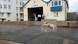 ex10-sidmouth-promonade-dog-foul-focus