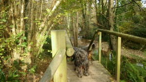 river-sid-ex10-dogs-on-the-bridge