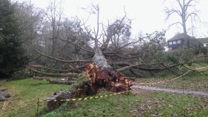 ex10-fallen-tree-barracade