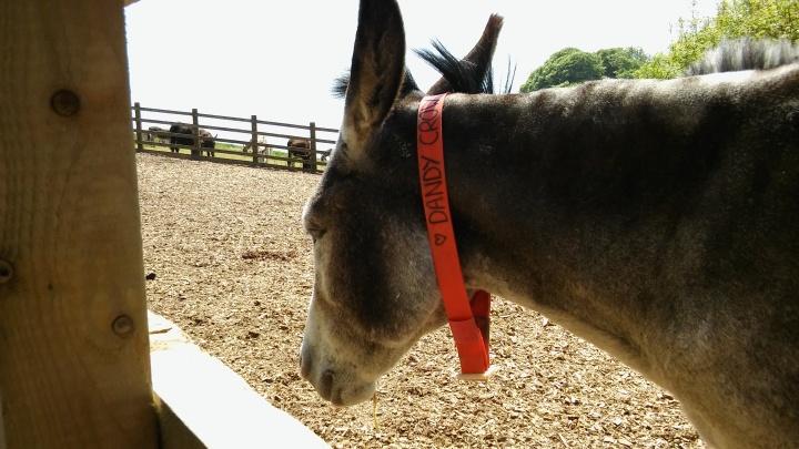 donkey sanctuary seaview